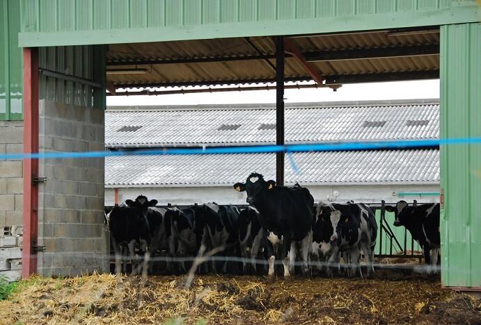UE: vers un retour des quotas laitiers?