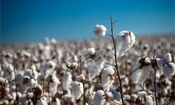 Prix du coton : la tendance haussière devrait se poursuivre à court terme
