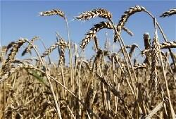 Hausse du prix du blé : la France surveille ses stocks de près